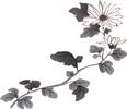 水墨画-菊花图