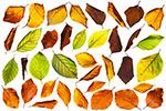 秋天树叶元素