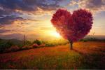 唯美心形大树图片