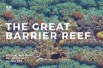 礁石纹理图案