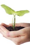 手捧植物苗子