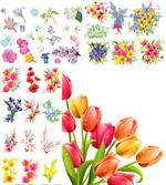 春季炫彩花卉