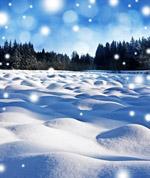 冰雪覆盖的树林