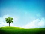 草地大树风光