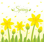 春季黄色花丛