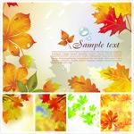 秋天泛黄树叶