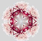 圆形花朵矢量