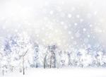 雪地和森林树木