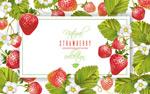 红色草莓框架