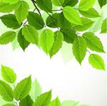 春季绿色树叶