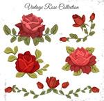 复古红色玫瑰花