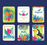 夏季热带卡片