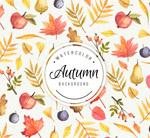 叶子和水果背景