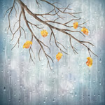 雨中的秋季树枝