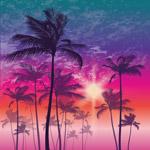 夕阳下的棕榈树