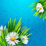 白色菊花花束