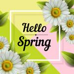 白色春季菊花框架