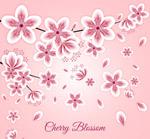 白边纸质盛开的樱花