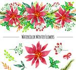 冬季植物和花边