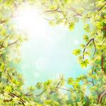 树梢和阳光框架