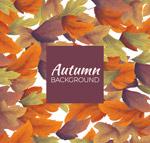彩绘秋季树叶背景