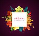 彩色秋季树叶背景