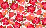 红色花卉无缝背景