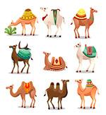 卡通骆驼矢量