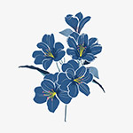 手绘蓝色花朵植物