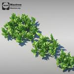 草植物模型2