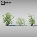 草植物模型3