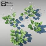 草植物模型4