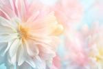 淡雅花朵背景