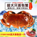淘宝面包蟹主图