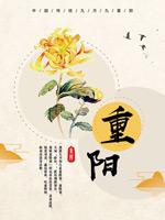 菊花重阳节海报