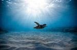 海底水下图片