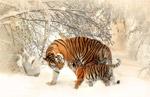 老虎和虎崽