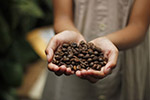 手捧咖啡豆