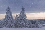 寒冬黎明森林