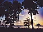 热带海滩剪影