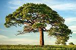 草地上的大树