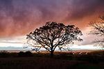 日落野外树木剪影