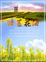 油菜花海旅游海报