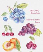 水彩水果插画