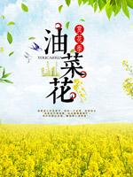 油菜花节旅游海报