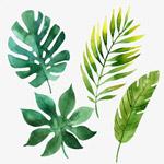 青春小清新植物