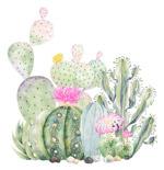 水彩手绘仙人掌