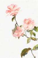 中国古风花卉