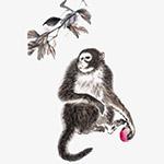 中国风水墨猴子