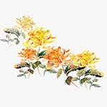 水彩菊花朵